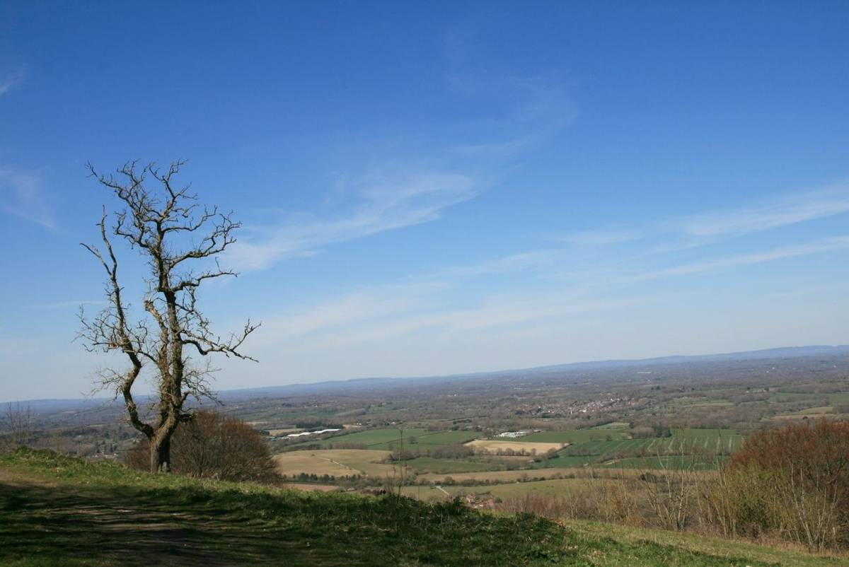 View North from Chanctonbury Ring.JPG