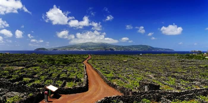 UNESCO Vineyard, Pico, Azores shutterstock_131557715.jpg