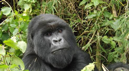 NAIROBI to KIGALI (13 days) Gorillas & Gameparks