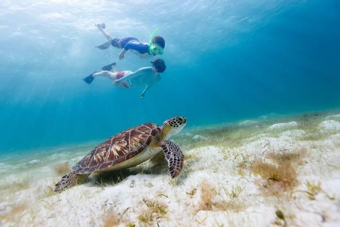 Child snorkelling green turtle Australia shutterstock_205960696.jpg