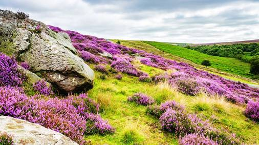 7-Night North York Moors Guided Walking for Solos Holiday