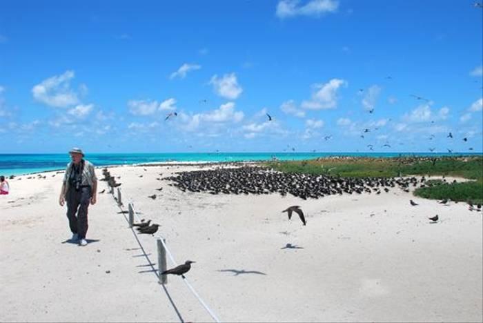 Nesting Seabirds (Andrew Rest)