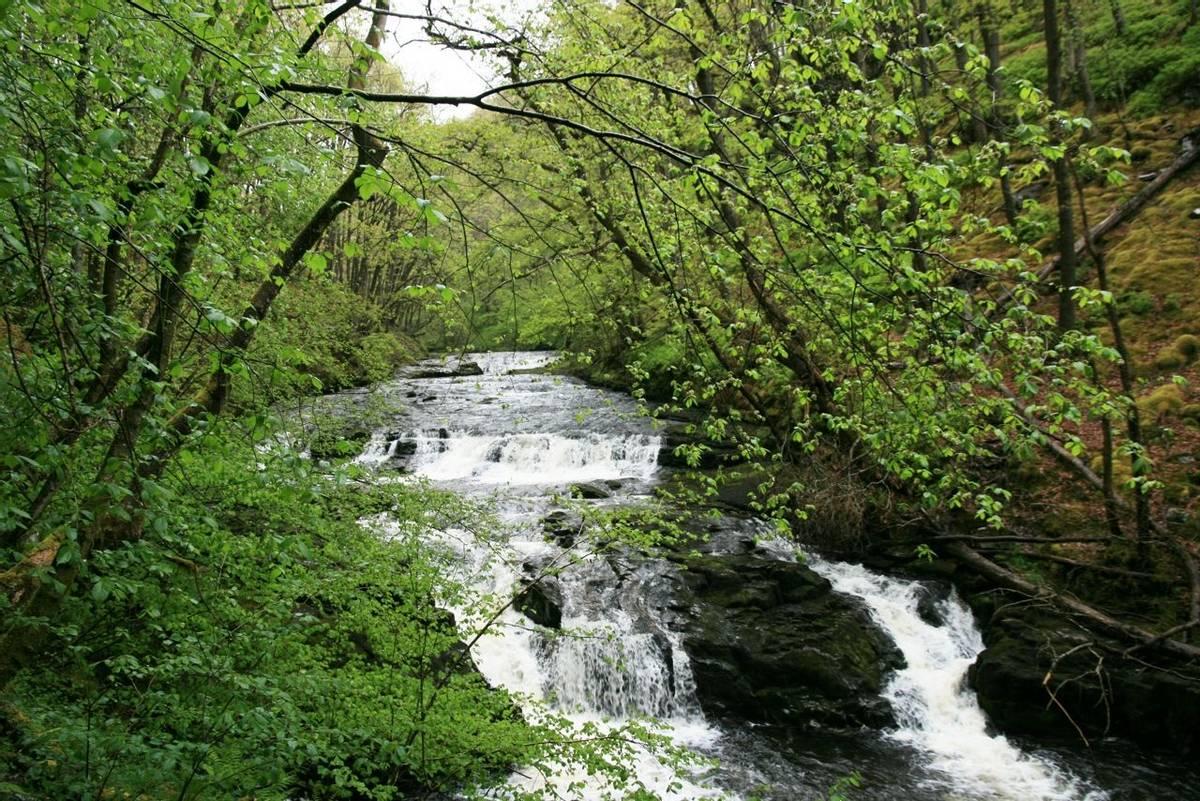 Nedd Fechan River.JPG