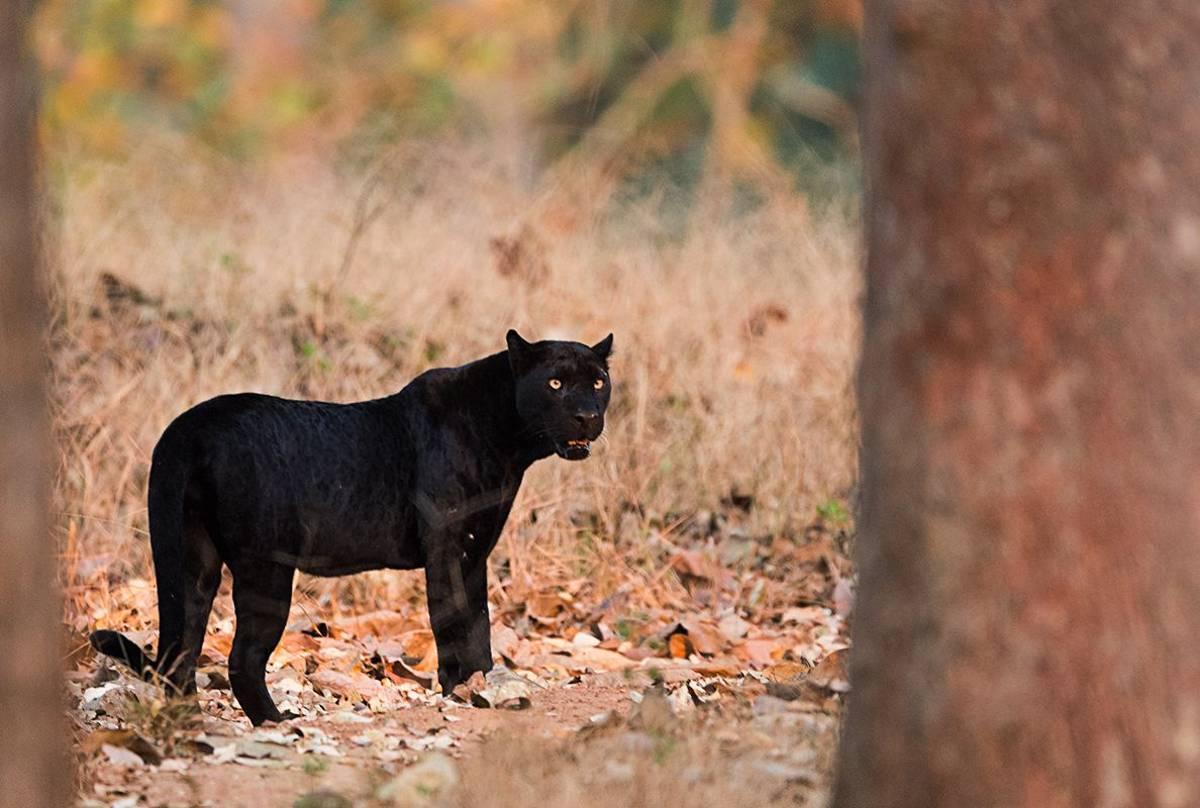 Blackie (Kaustubh Mulay).jpg
