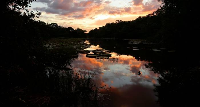 Vistoria Amazonica water lilys (Peter Stott)
