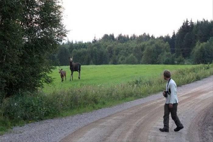 Elk watching (Marcus Eldh)