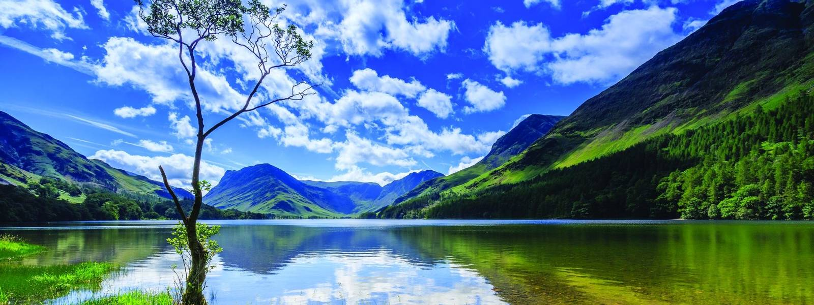 Lone tree at Buttermere, The Lake District, Cumbria, England