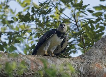 Panama - Birding the Darien Gap