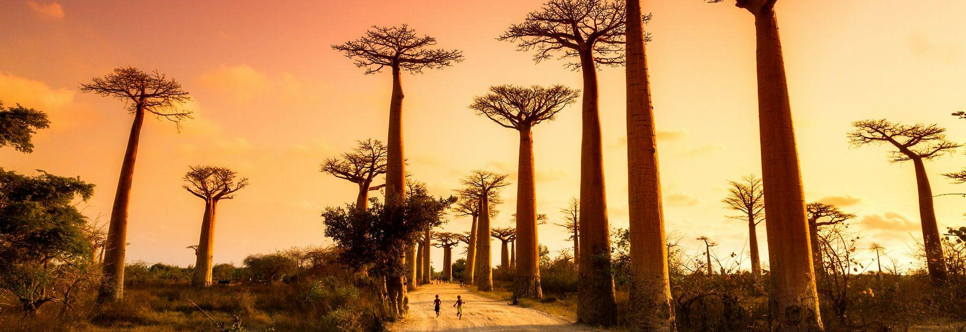 Avenue Of Baobabs Shutterstock 259688654