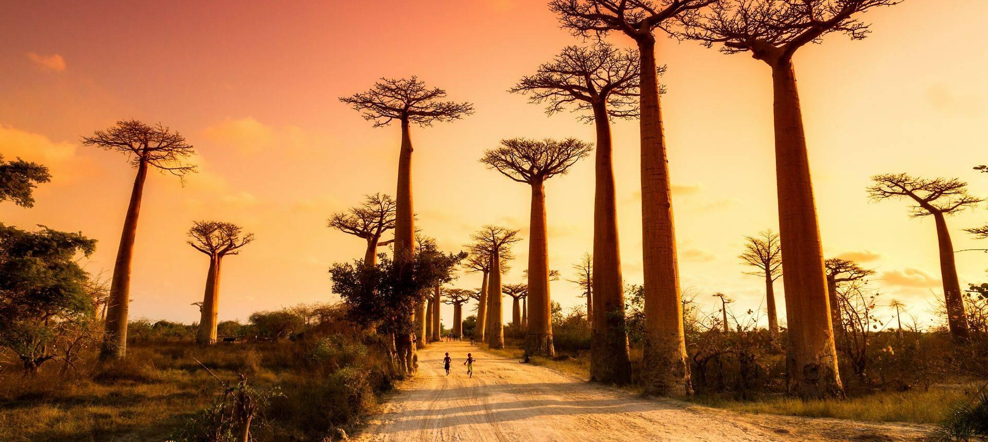 Avenue Of Baobabs Shutterstock 259688654