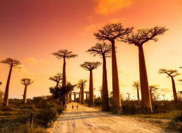 Madagascar: A Wildlife Photography Tour