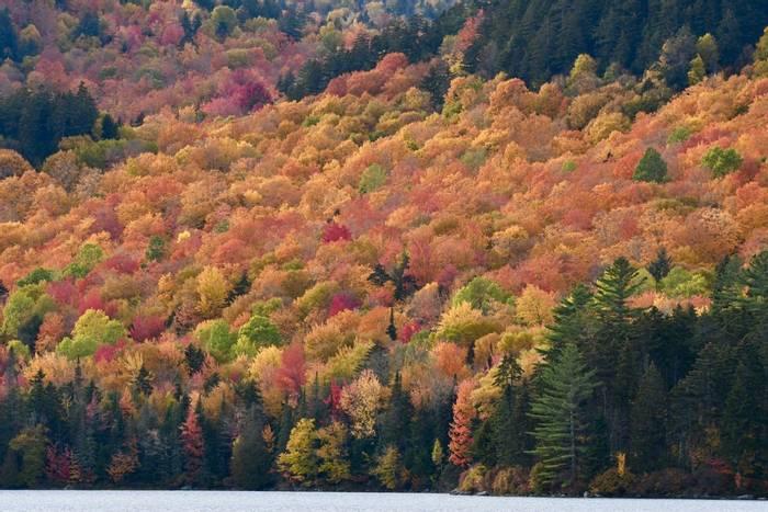 Golden Lakeside (Adam Dudley).jpg