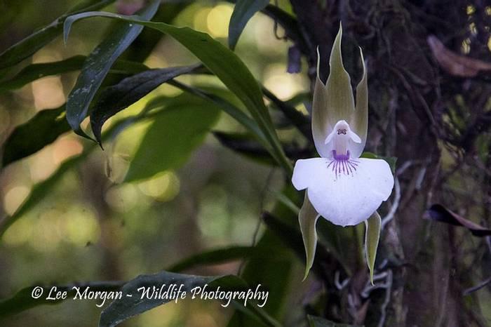 Orchid (Lee Morgan)
