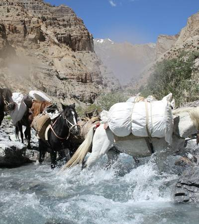 Horses in gorge to Daat