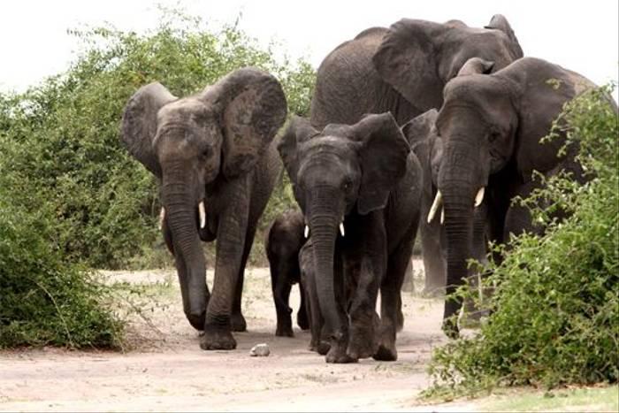 Elephant Family (Grant Atkinson)