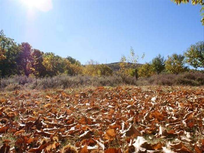 Autumn in Spain (Ed Drewitt)