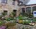 Cornwall - Hidden Gardens of Cornwall - Steve Dance - Burncoose Nurseries - DSCF1236.jpg