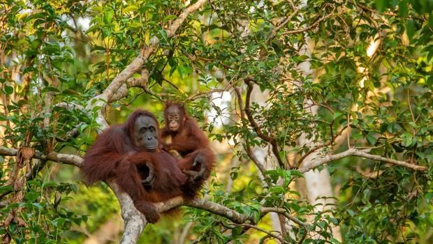 The Best of Borneo