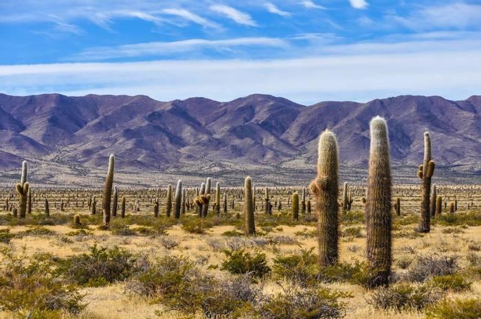Cactus forest in los Cardones National Park near Cachi, Argentina shutterstock_365985968.jpg