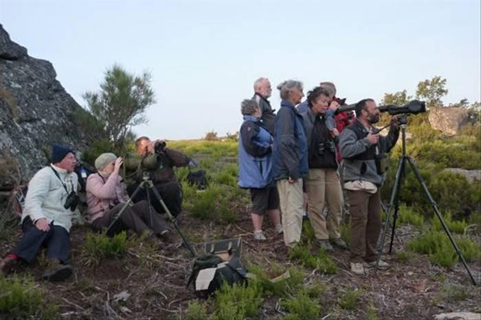 Watching Iberian Wolves!! (Byron Palacios)