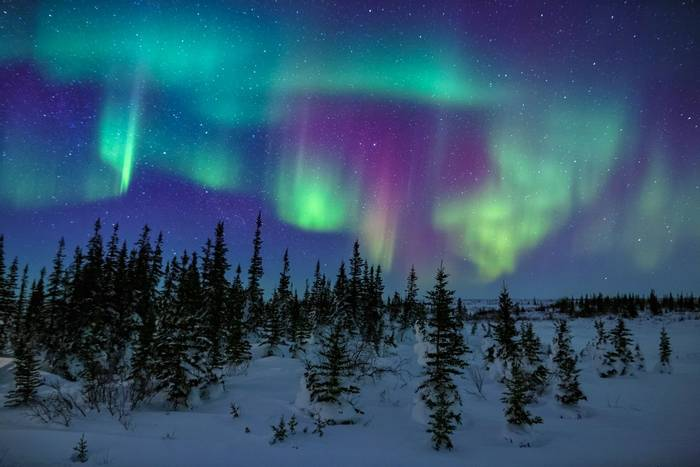 Northern Lights, Churchill, Canada shutterstock_1253485756.jpg