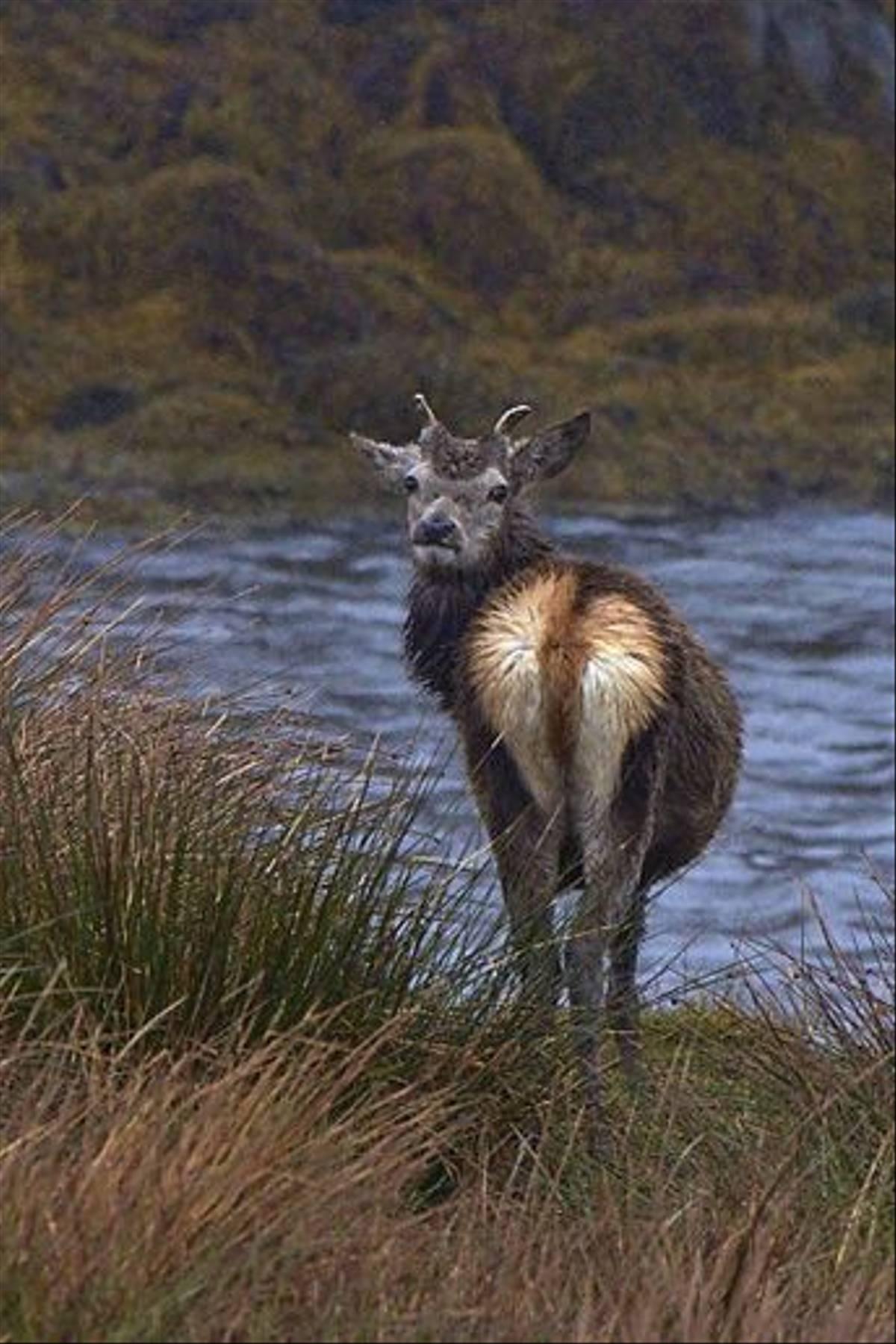 Red Deer (Derek Mills)