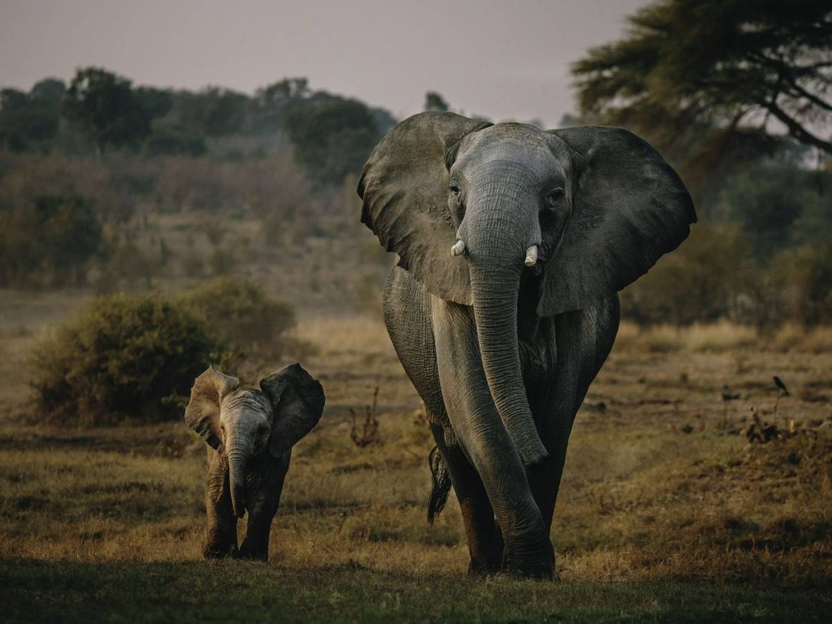 South Africa – Drakensberg & Zululand – Wildlife - Elephants – AdobeStock_234432380.jpeg
