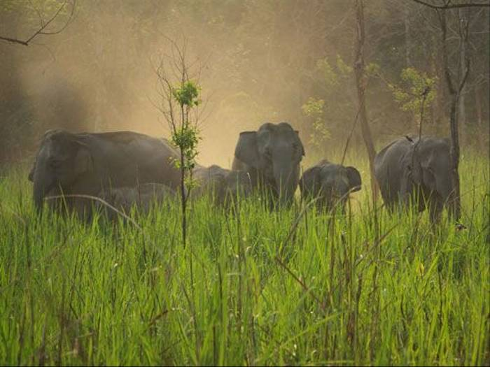 Wild Indian Elephants (John Mitchell)