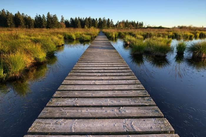 Hautes Fagnes, Belgium Shutterstock 473739040