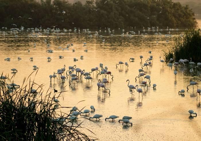 Flamingos, Donana National Park, Spain shutterstock_1182616111.jpg