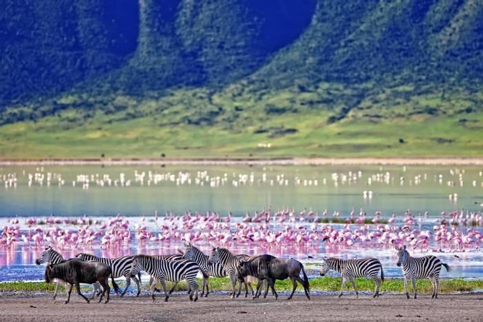 Zebra Ngorongoro Crater, Tanzania shutterstock_212602420.jpg