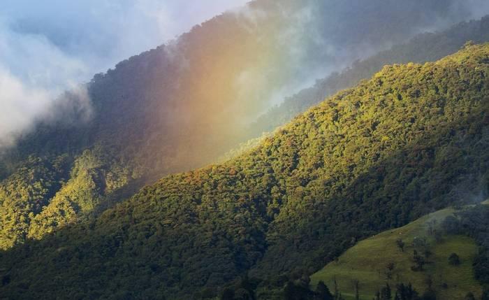 Naturetrek Reserve - Lou Jost