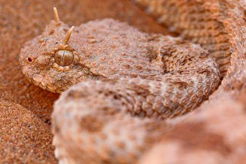 Reptiles and Amphibians of Morocco