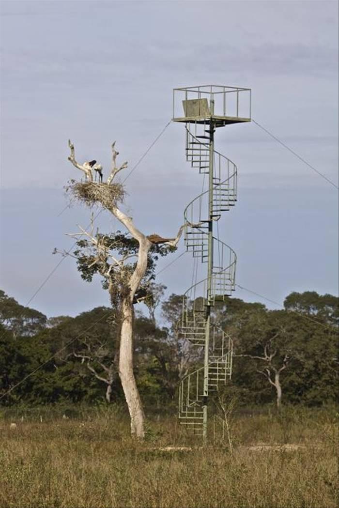 Jabiru Watching Tower