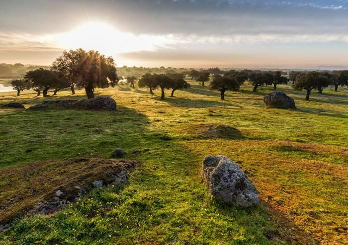 Cork Oaks, Extremadura, Spain shutterstock_585843599.jpg