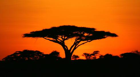 NAIROBI to DAR ES SALAAM (14 days) Gameparks & Zanzibar
