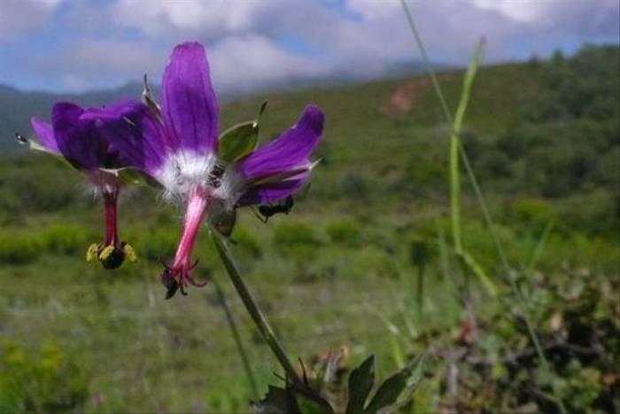 Geranium kariense - Tienshe lake, S.Zongdian (Phillipe de Spoelberch)