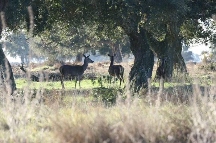 Red Deer (Duncan Woodhead)