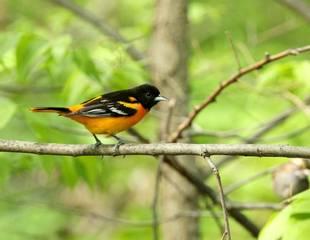 Spring Birding in New York City