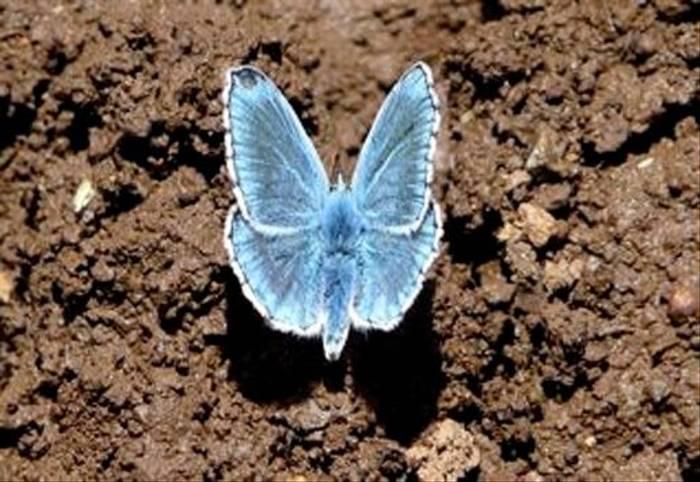 Turquoise Blue (William Lintott)