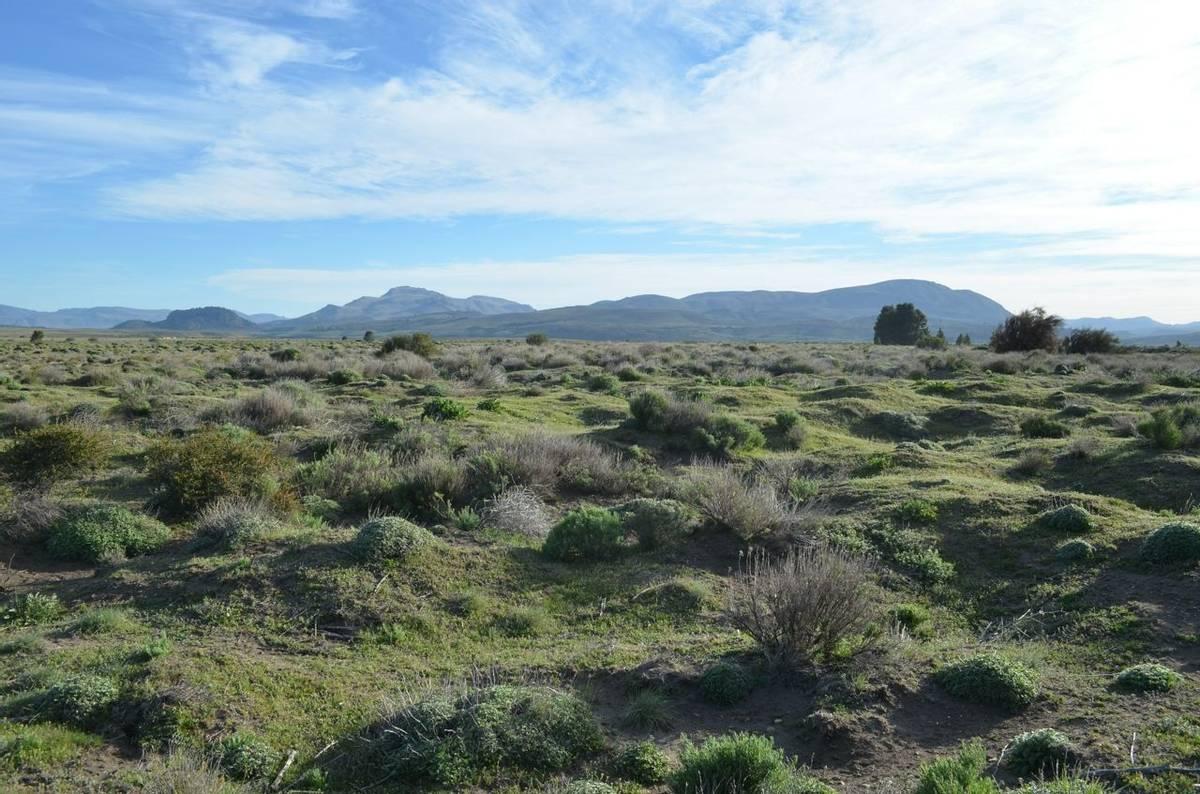 Patagonia - Patagonian Steppe - AdobeStock_73237538.jpeg