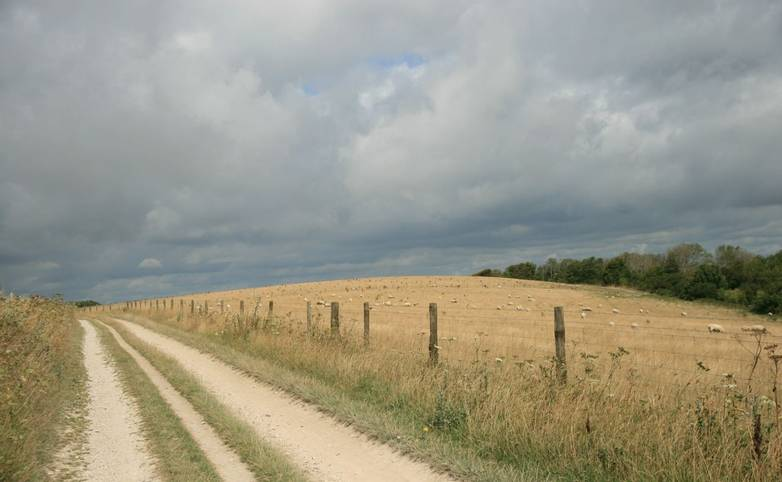 South Downs Way near Steyning.JPG
