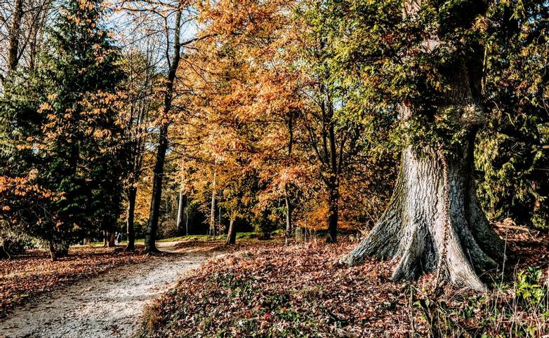 batsford arboretum cotswolds