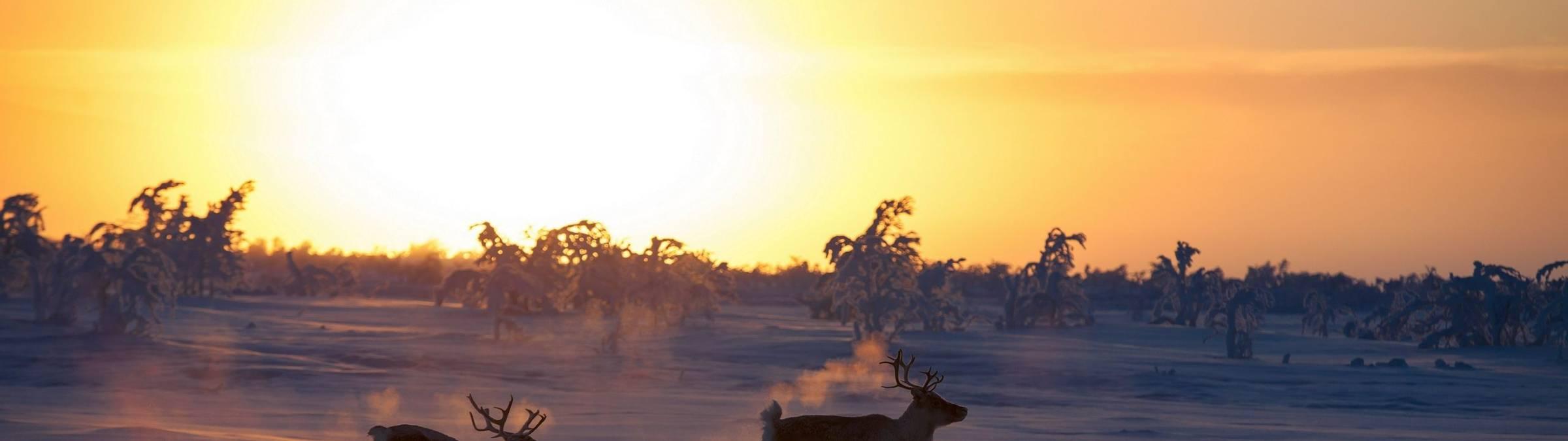 Harriniva Hotels & Safaris Winter 24