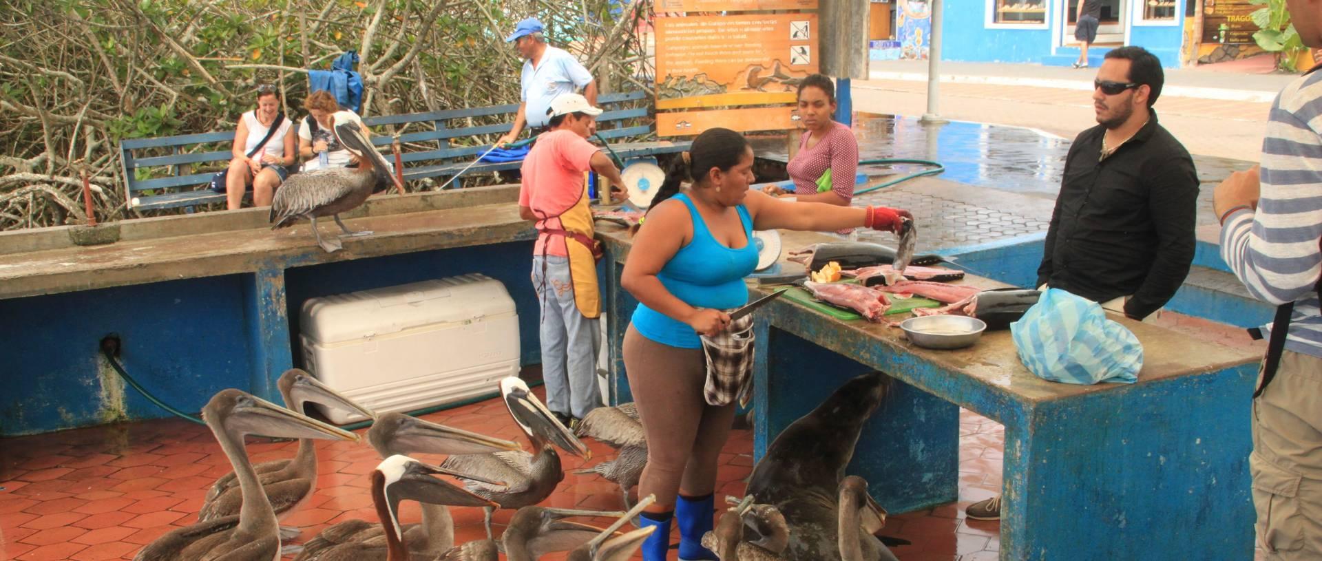 Fish Market, Galapagos