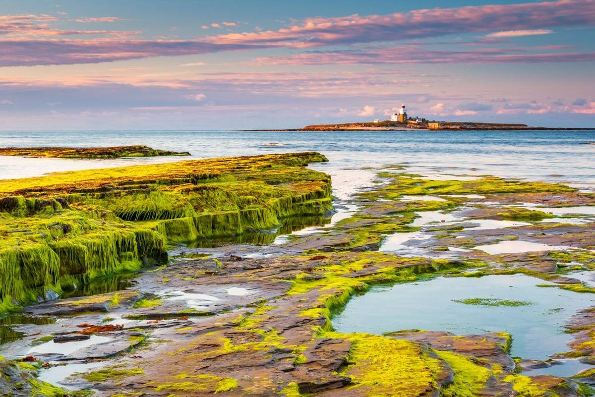 Coquet Island just of the coastline at Low Hauxley in Northumberland is an RSPB reserve
