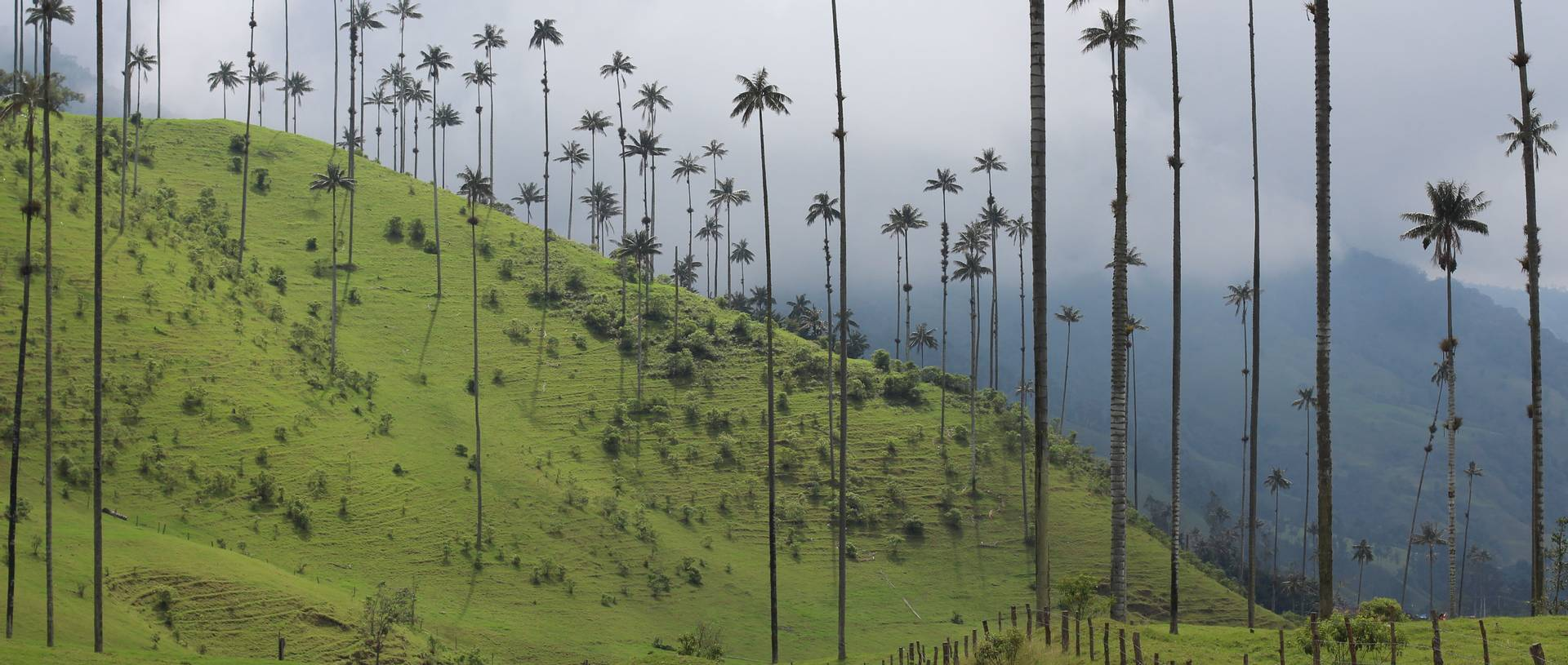 Wax Palm Region, Salento, Colombia