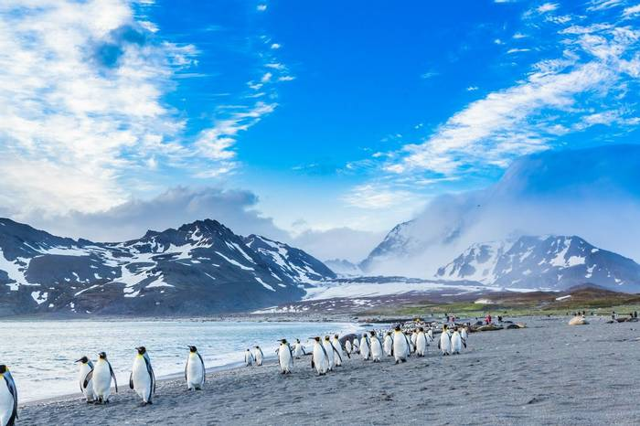 Cruising King Penguins, Antarctica Shutterstock 170880344