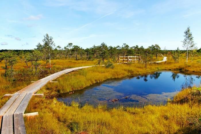 Kemeri national park, Latvia shutterstock_151630793.jpg