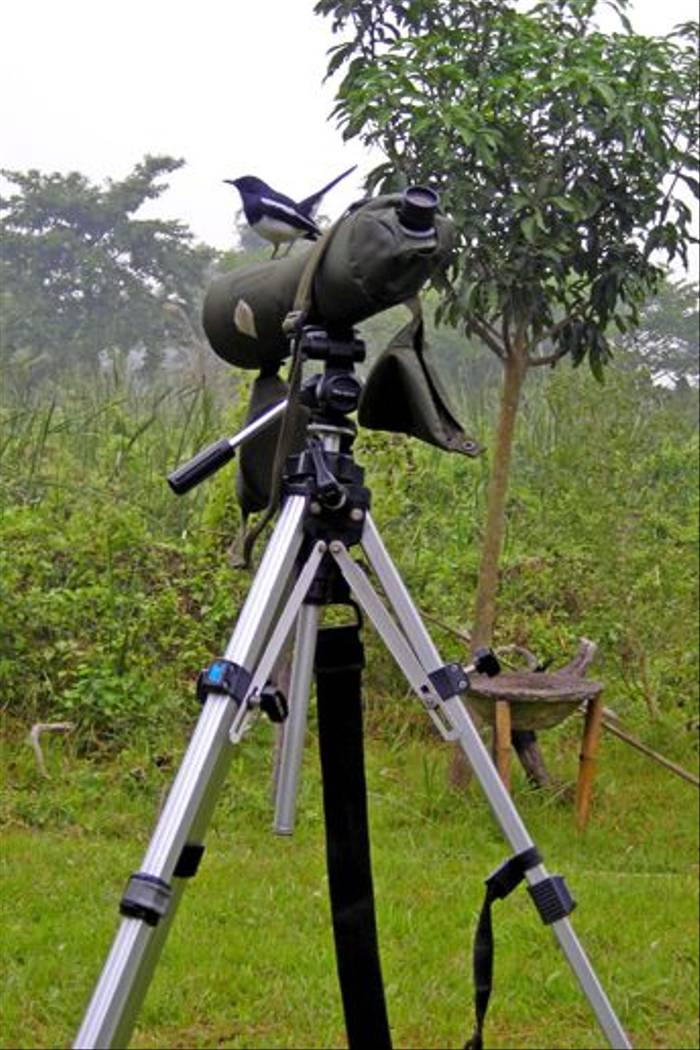 Oriental Magpie Robin on telescope, Koshi (Julian Thomas)